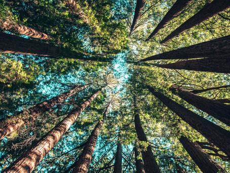 Fowles'un Ağaçları