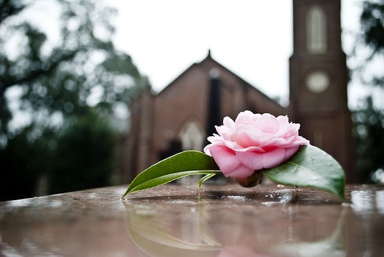Funeral casket with a pink rose.jpg