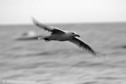 Flying_Stefanie Gierszewski