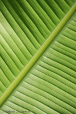 palm leaf_web