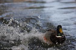 splashy landing_web