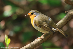 the robin_web