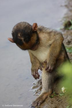 macaque meets bug