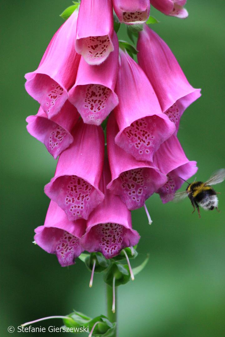pollination_web