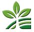 google-leaf.png