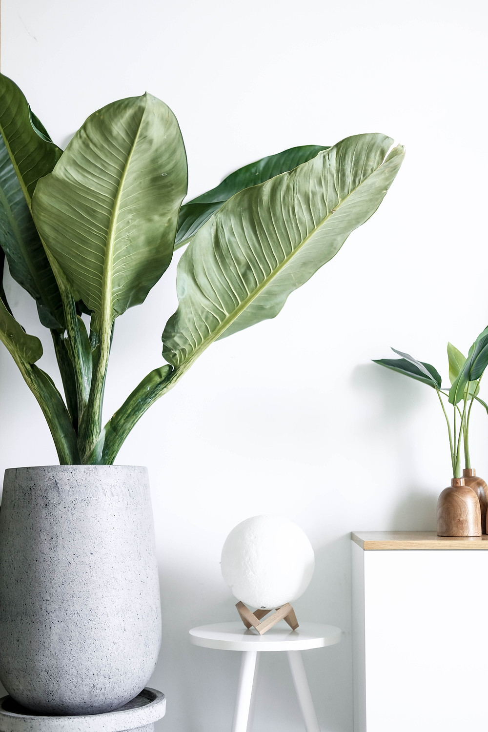 Indoor plants to give a natural element to your home.