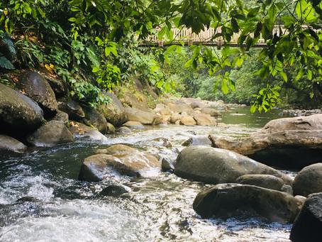 Rivière Bras David | Route de la Traversée
