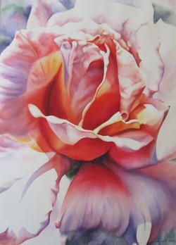 Radiant Rose web