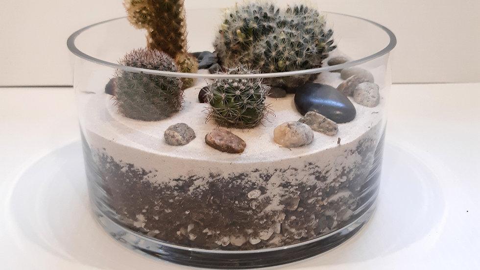 Bol cylindrique en verre de 8'' avec cactus