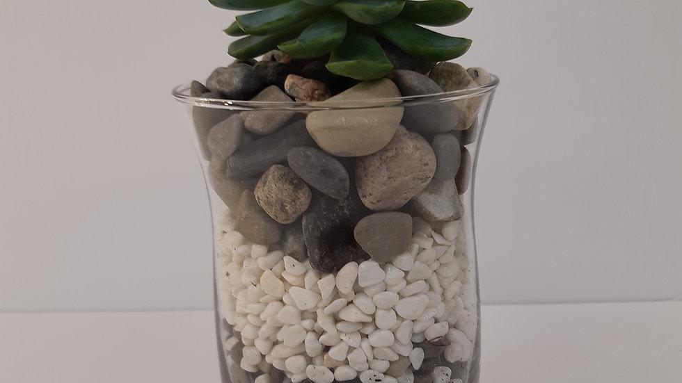 Vase de 4'' avec plantes succulentes