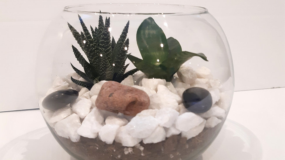 Boule en verre de 8 '' avec succulente et Haworthia Zebra.