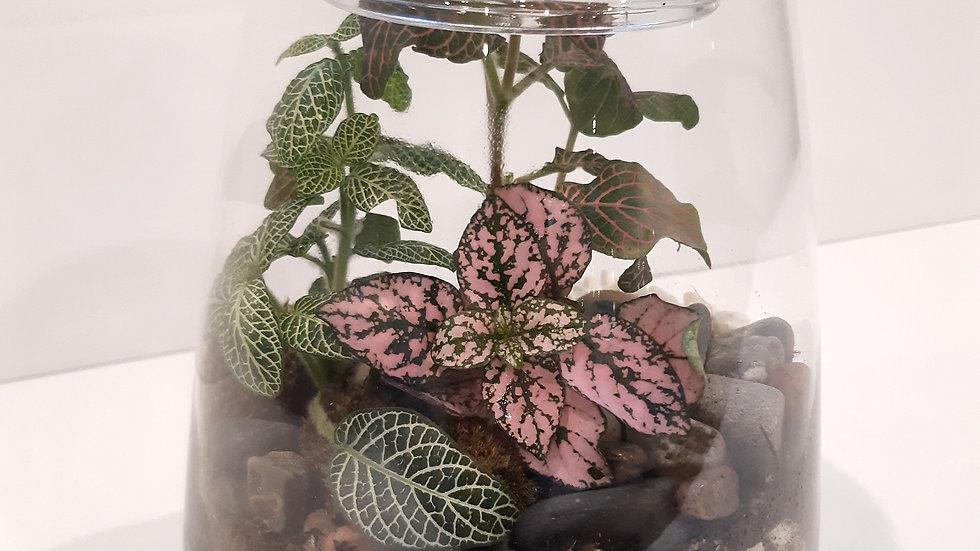 Vase pyramide en verre clair de 6'' avec plantes tropicales fittonia.