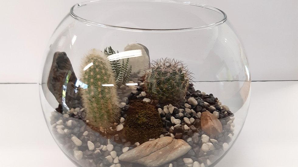 Boule en verre clair de 10'' avec cactus et haworthia zebra.