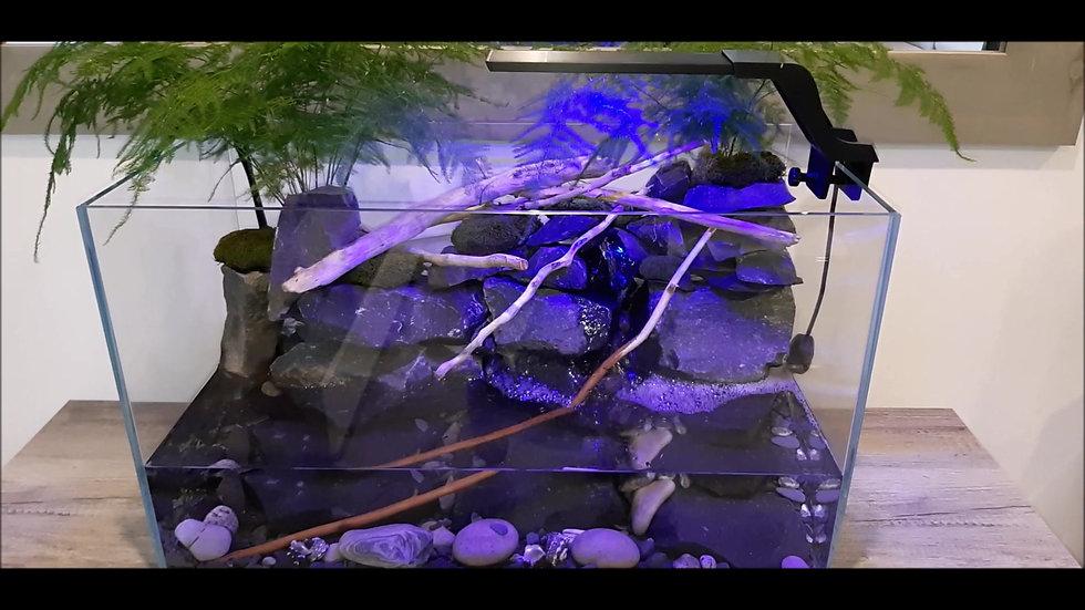Aqua terrarium