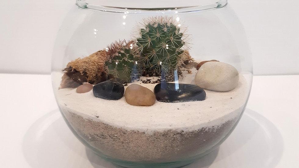 Boule en verre clair de 6'' avec cactus