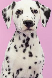 Dog's Portrait    _edited.jpg