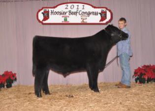 2nd place steer sired by prodigy 2011 Ho