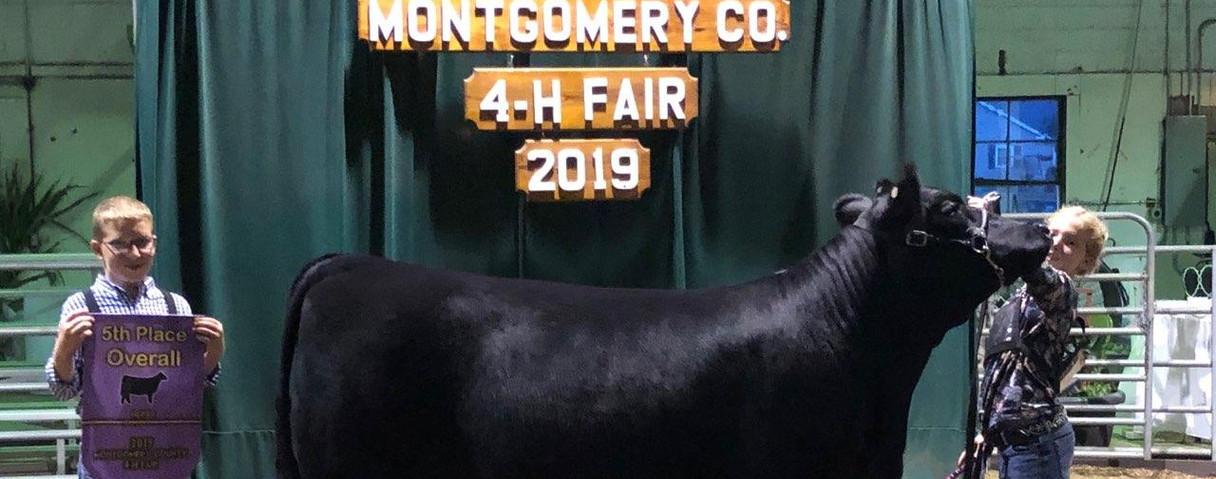 Kesslers heifer 2018 sale lot 13.jpeg