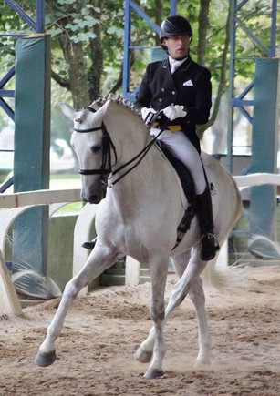 Andre Ganc Lusitanos for sale