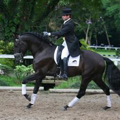 Andre_Ganc_Lusitano_Horse_1.jpg