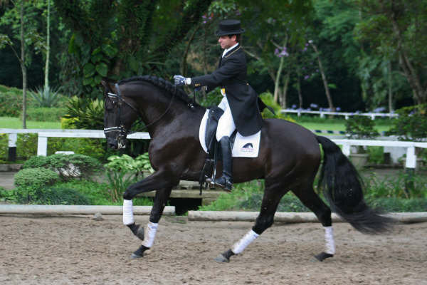 Andre Ganc Lusitanos for saleAndre Ganc Lusitanos for sale