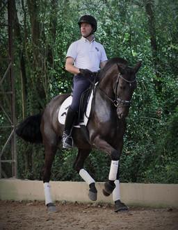 Cavalo_Lusitano_Indochina_1.jpg