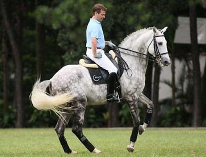 Andre_Ganc_Lusitano_Horse_2.jpg