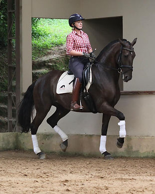 Lyric_Dressage_Lusitano_Indochina5.jpg