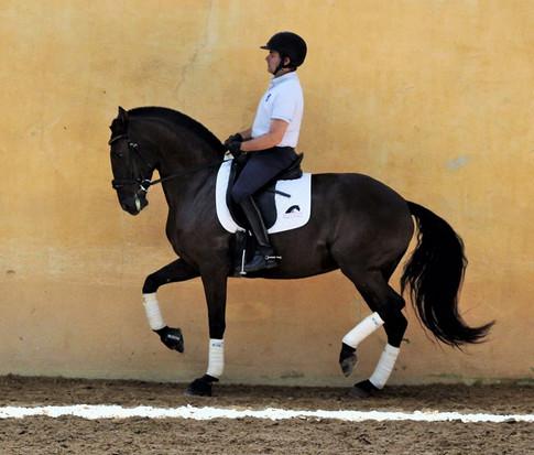 Cavalo_Lusitano_Indochina.jpg