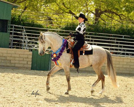 Lyric Dressage Vaquarius