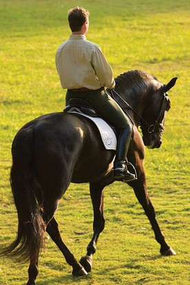 Dressage Lusitanos for sale