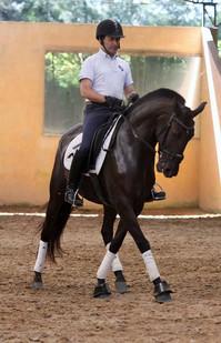 Cavalo_Lusitano_Indochina_4.jpg