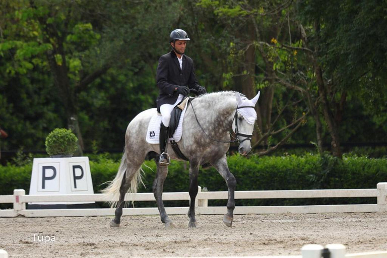 Lyric Dressage - Lusitano gelding Lord