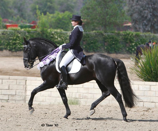 Allison Mathy Lusitanos for Sale