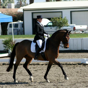 Barock lusitano horses for sale