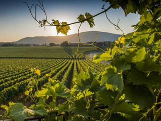 Guide to a Perfect Vacation in Franciacorta—Italy's Secret Lake-Side Wine Region