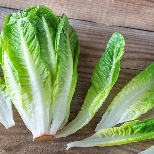 Romaine Heart Lettuce