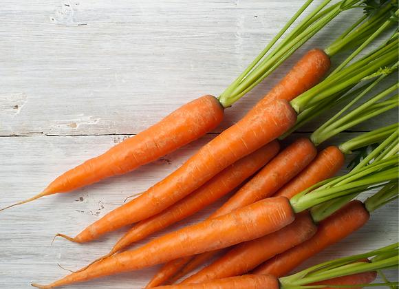Medium Carrot