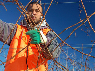Free Spanish-language webinar on tree care and weed control-November 10, 2020