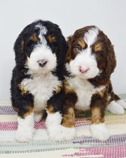 Marley & Noah.jpg