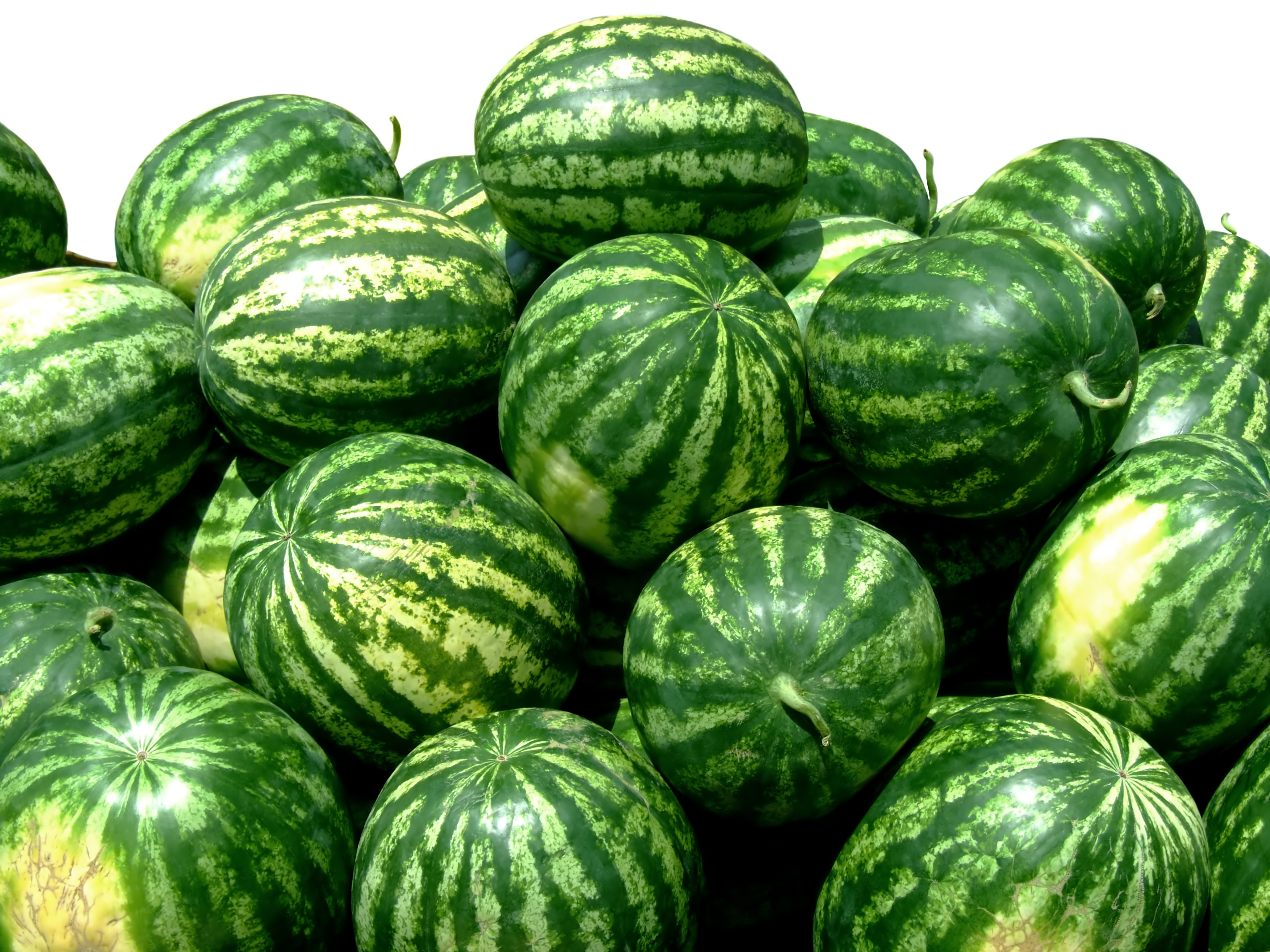 watermelon bunch