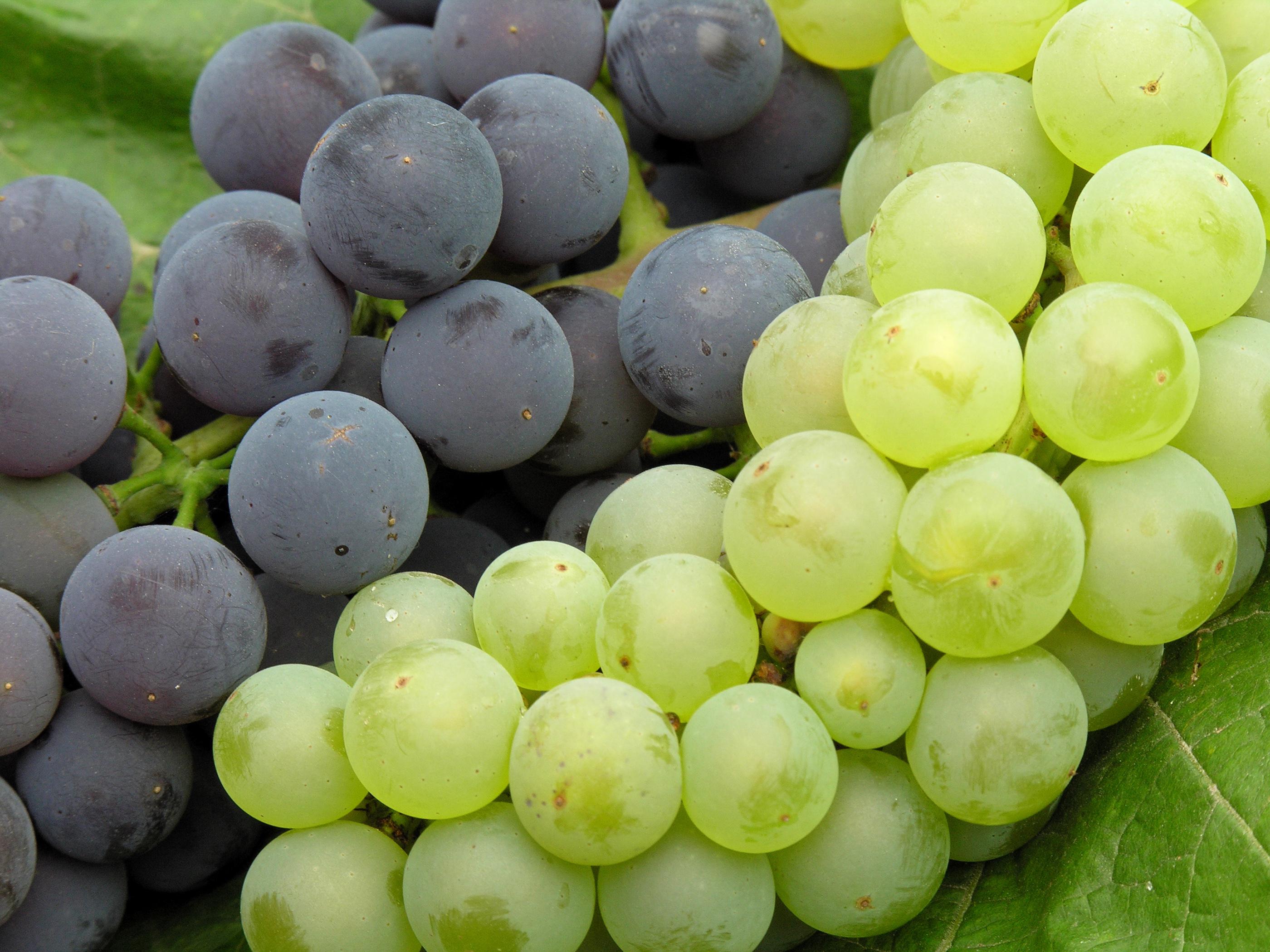 grapes closeup3
