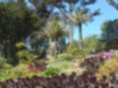 Tresco Abbey Garden in May by Jon Mackenzie
