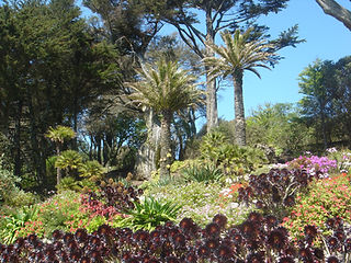 Tresco Abbey Garden in May