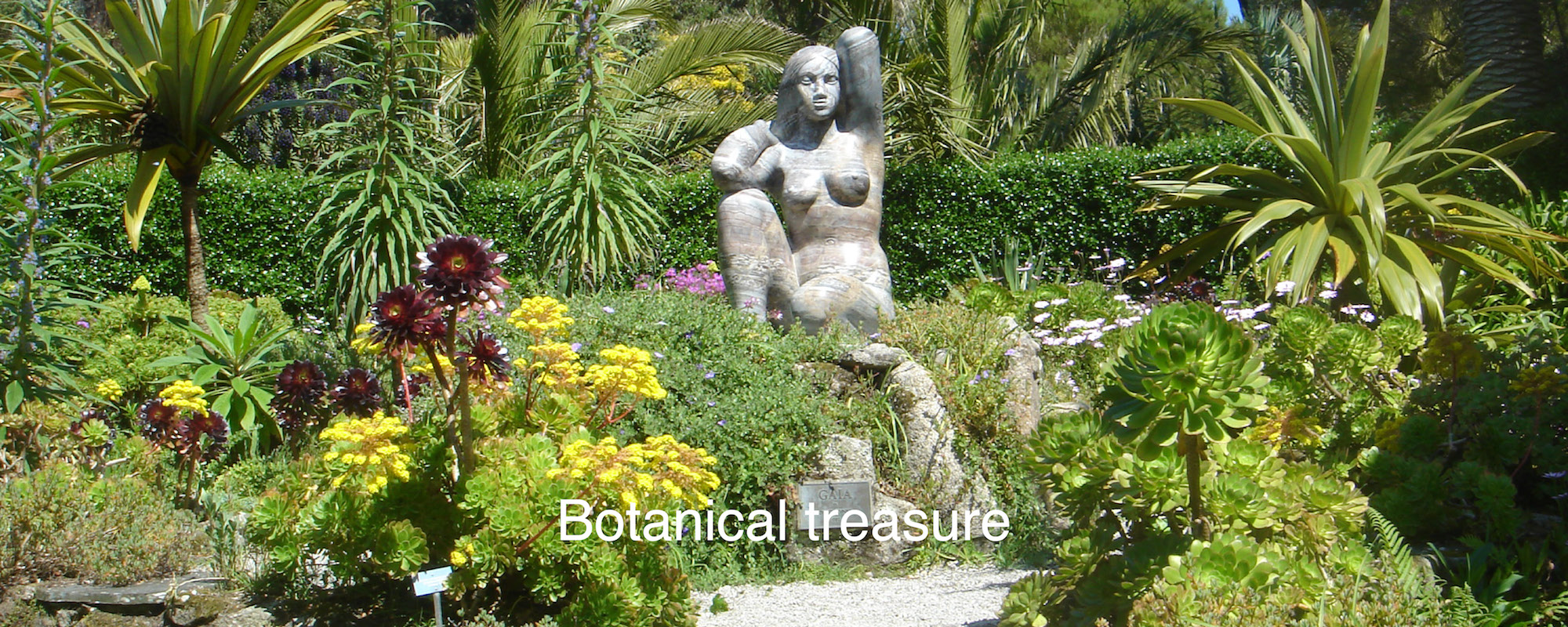 Botanical treasure