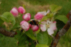 Trenoweth Community Orchard, Isles of Scilly