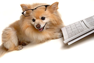 Dog picture from Shutterstock