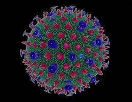 Avian flu virus