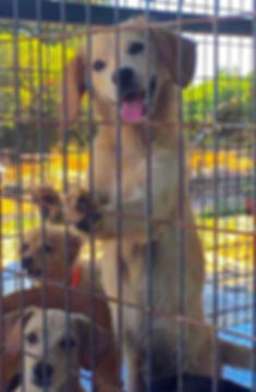 Cyprus rescue dogs