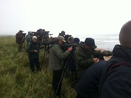 Birdwatchers on the Isles of Scilly